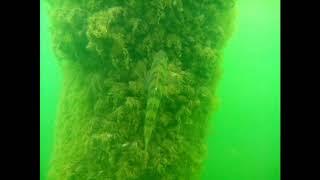 съемки рыбы под водой