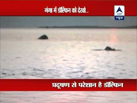 Dolphins seen in River Ganga in Patna