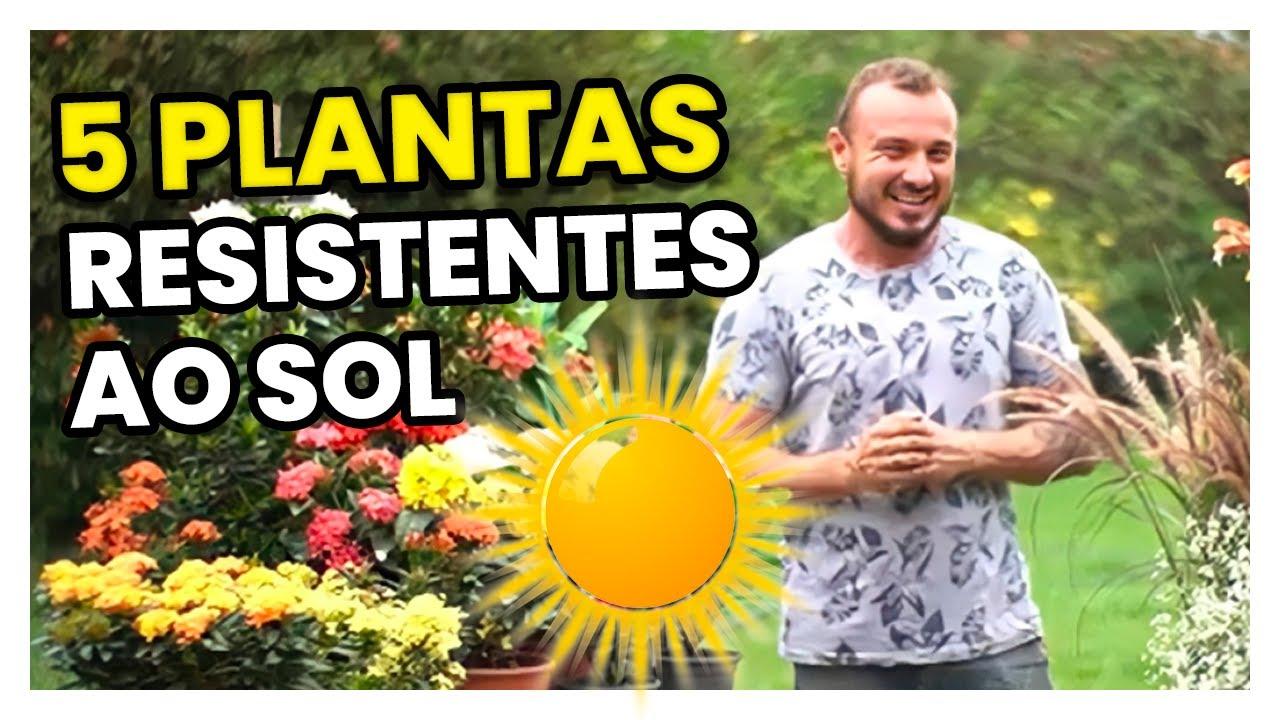 Dicas de Jardineiro, Plantas mais resistentes ao Calor, por Murilo Soares