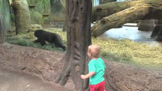 Toddler playing Gorilla Toddler at the Columbus Zoo!