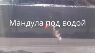 Приманка Мандула для судака видео обзор поведение под водой