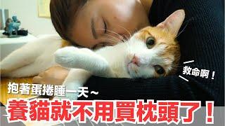 好味小姐-抱著蛋捲一睡不醒-被偷拍了-好味貓日常