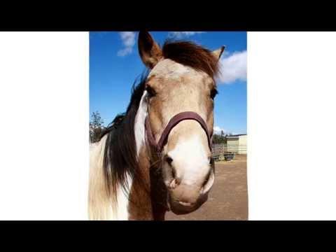 EOI Talking Horse talks Hay