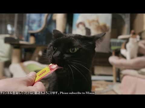 2018.8.5 ちゅーる   Cats & Kittens room 【Miaou みゃう】