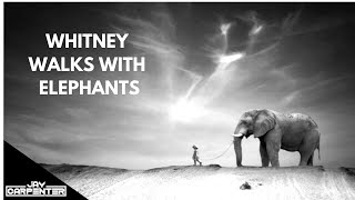 Ten Walls Vs Whitney Houston - Whitney Walks With Elephants (Jay Carpenter Mashup)