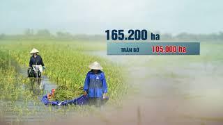 Đỉnh điểm lũ lụt tại ĐBSCL | VTC14