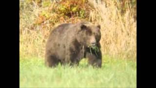 Preacher And The Bear : Mac Wiseman
