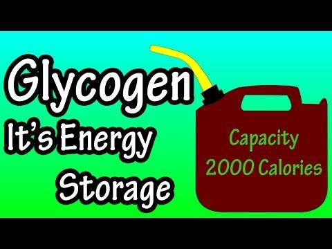 Glycogen - What Is Glycogen?