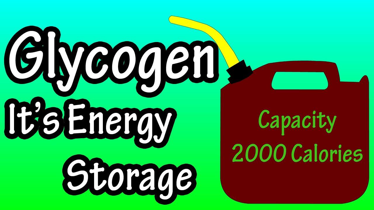 glycogen what is glycogen youtube