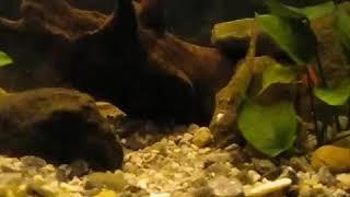 Аквариум и необычные аквариумные рыбки