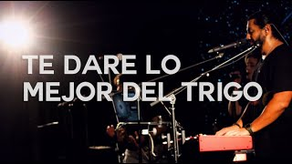 Te dare lo mejor del trigo por Alex Zamora & Alabanza Obra de Orange