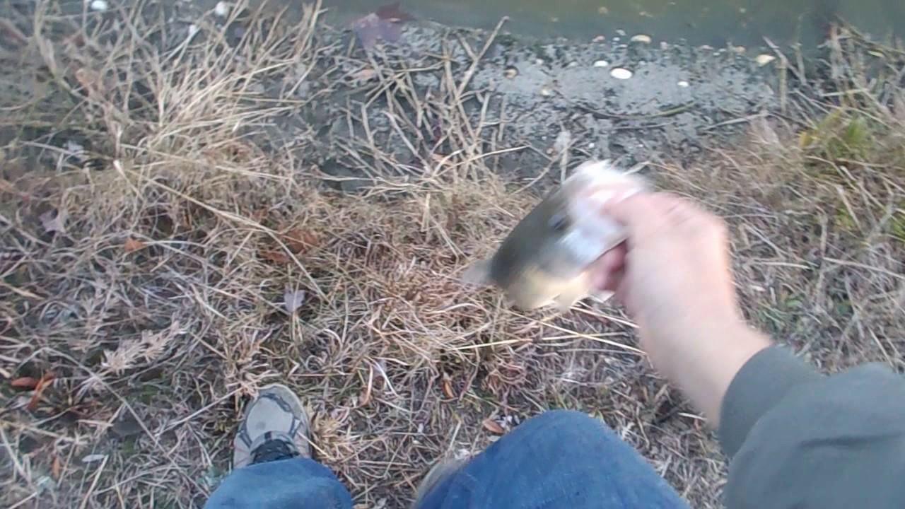 Winter Bass Fishing Techniques 1 Dragging Shakyhead