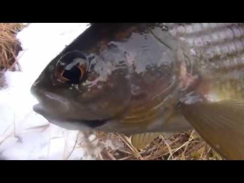 Рыбалка на сбирулино бомбарду / Ловля на сбирулино бомбарду хариуса