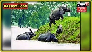 60 Wild Animals Lost Their Lives In Kaziranga, 32 Highlands Constructed