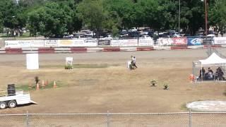 Rocket Rocking It At The Sierra K9 Trials