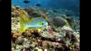 видео Животный мир Тихого океана.