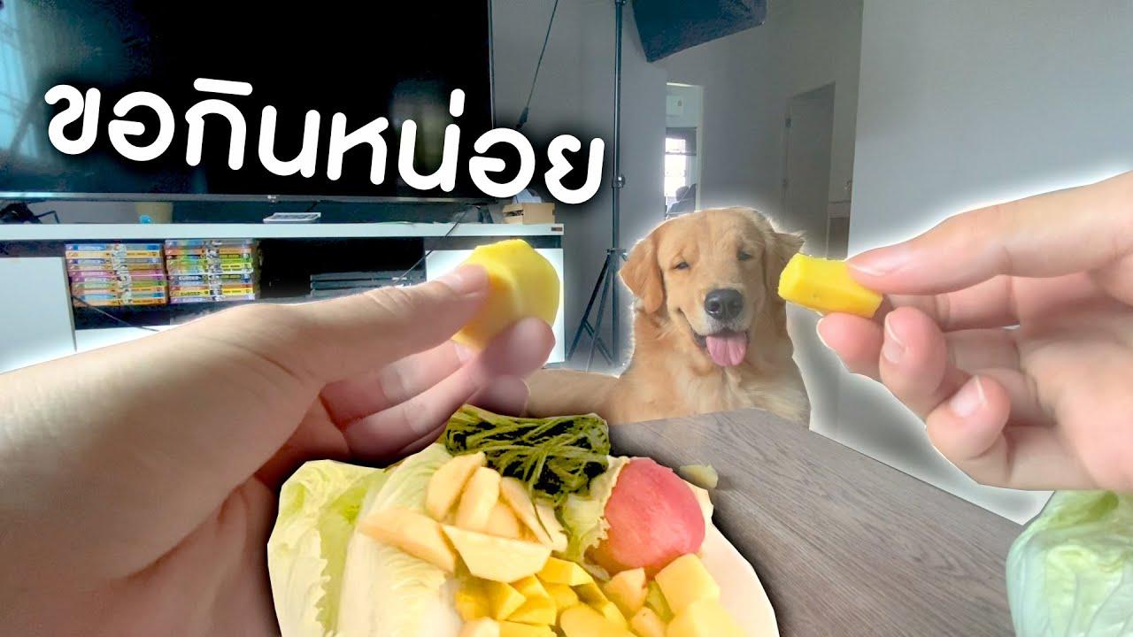 บอยและเหล่าผักของเขา || Dog food test Ep.1