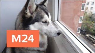 Хозяин держит собаку в ужасных условиях  на балконе в одной из многоэтажек Москвы - Москва 24