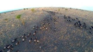 Homemade Safari: Incredible Drone Footage Of Serengeti Wildlife