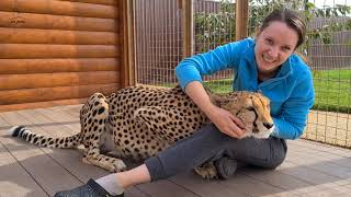 Sly and affectionate Cheetah Gerda