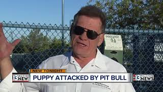 Las Vegas dog owner left with broken hand and injured puppy after dog park attack