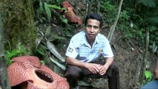 Mr. Holidin with Double Bloom of Rafflesia Arnoldii