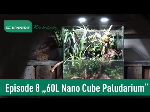 Paludarium im 60L Nano Cube | Kochstudio Episode 8 | DENNERLE