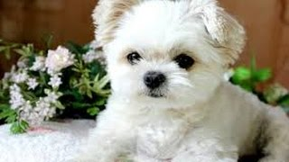 Cute dogs and puppies doing funny things compilations 2016