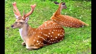 из фото от Светланки Звёздочкиной  Альбом Жирафы, олени, кенгуру