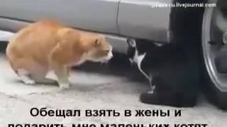 Похоже у кошек разборки, ещё хуже!