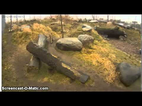 Daily walk.Tallinn Zoo. 05.01.12.mp4
