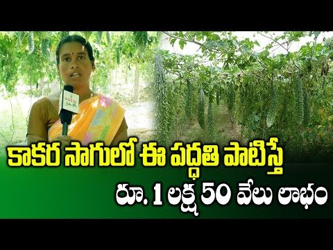 Cultivation Of Bitter Gourd Through Pendal System || High Profit Cultivation || SumanTV Rythu