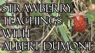 Strawberry Teachings with Albert Dumont