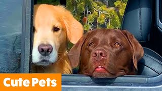 Cutest Silly Animals | Funny Pet Videos