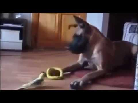 TOP 5 DOG VIDEOS #3 : Dog Video Series