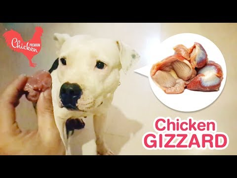 Dogs Eat Raw Chicken Gizzards And Chicken Quarters While It Is Raining [ASMR] 動物の咀嚼音