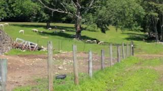Hemlock Hill Farm