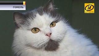 Гостиница для собак и кошек появилась в Гомеле. Сколько стоит день пребывания в стандартном номере?
