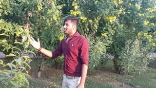 Kamlesh Rajput _ Man Mor Bani Thangat Kare (without instruments )