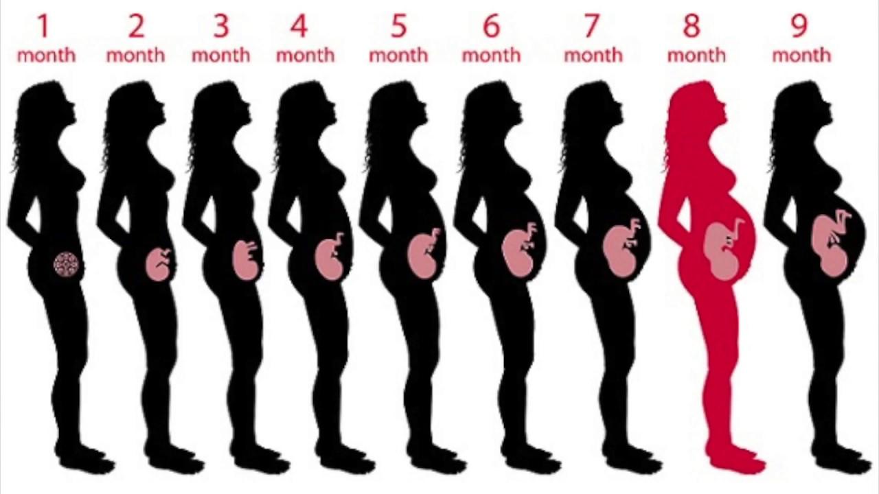 3 months pregnant signs symptoms amp untrasound