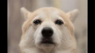 【関連動画】 人を殺すこともある可愛い動物10選 https://www.youtube.c...
