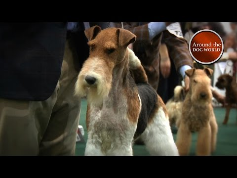 Around the Dog World - National Terrier (Ep 54)