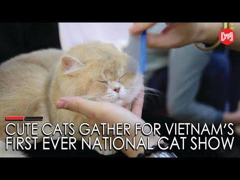 Cute cats gather for Vietnam's first ever national cat show