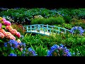 Gambar cover 10 hours Relaxing Soothing, AMAZING Beautiful Nature with Peaceful  in 4k, by Tim Janis
