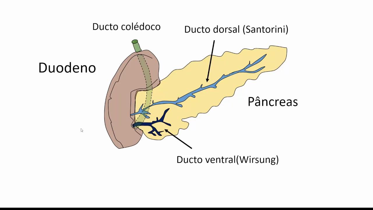 Pâncreas divisum - YouTube