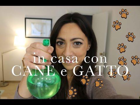 in Casa con Cane & Gatto | pulizia e accessori | CasaSuperStar