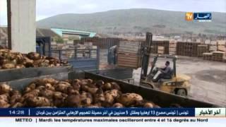 الجزائر تصدر 287 طن من البطاطا عبر ميناء مستغانم