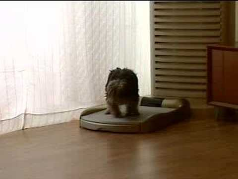 Anypotty Automatic Dog Toilet Youtube