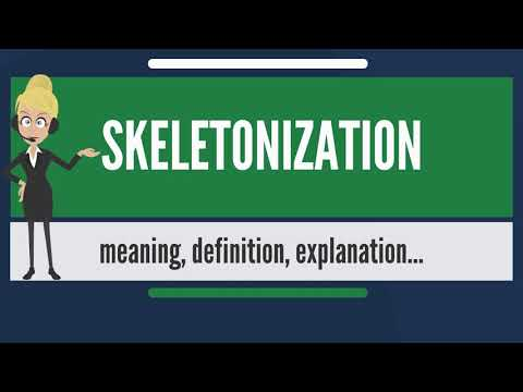 What is SKELETONIZATION? What does SKELETONIZATION mean? SKELETONIZATION  meaning & explanation