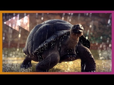 🔴 Planet Zoo Beta Launch | Livestream Archive